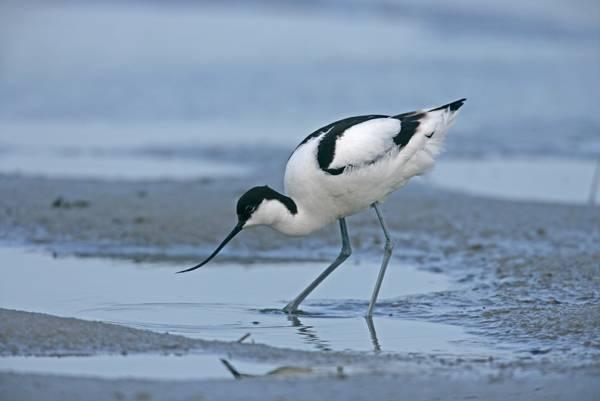 Bird Watching - Exe Estuary